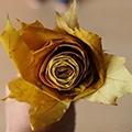 Роза из осенних листьев